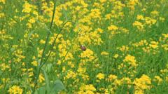 Flower footage Stock Footage