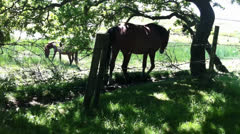 Horse walking at fence Stock Footage