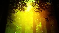 Deep Magic Forest 7 fireflies Stock Footage