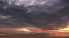 Many birds flock at background purple evening sky Stock Footage