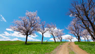 Stock Video Footage of spring landscape