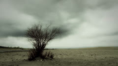 Eerie Tree in Post Apocalyptic Landscape Stock Footage