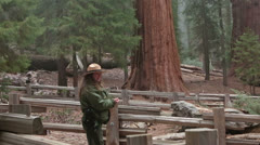 Park Ranger ecology talk Sequoia NP Giant Redwood trees HD 6516 Stock Footage