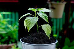 tiny plant - stock photo