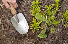 Dig (the Garden) - stock photo