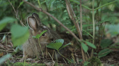 Rabbit 9 Stock Footage
