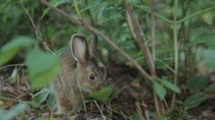 Rabbit 11 Stock Footage