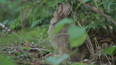 Rabbit 12 Stock Footage