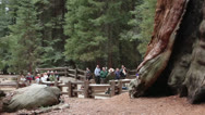 Stock Video Footage of Park Ranger tourist crowd presentation Sequoia National Park HD 6489