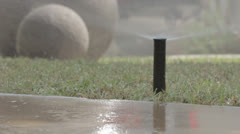 Sprinkler head pops up to water lawn - stock footage