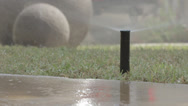 Stock Video Footage of Sprinkler head pops up to water lawn