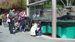 Visitors in Ueno zoo standing in front of glass with sea mammals Stock Footage