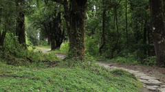 Stone road in Nepalese forest jungle Stock Footage