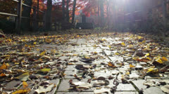 Namsan Leaves Falling Stock Footage