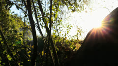 Forest Sun - stock footage