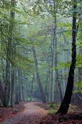 dutch autumn fall forest scene - stock photo