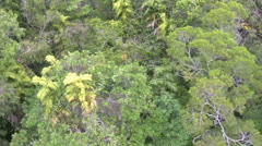 RainForestKuranda Stock Footage