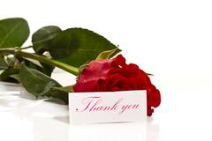 Red rose with gratitude Stock Photos