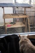 Cat Crouching and watching birds Stock Photos