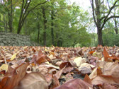Stock Video Footage of Dried leaves spread on the woodland area