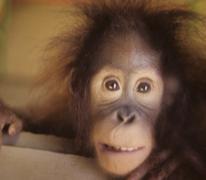 Closeup of happy Monkey - stock photo