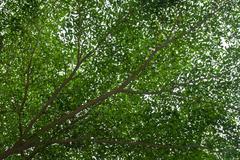 tree abundance - stock photo