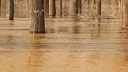The spill rivers flood in the woods. Stock Footage