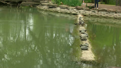 Ducks Walking Between Resting Turtles Stock Footage