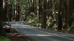 Truck boat on vacation drive through California Redwood forest HD 6166 Stock Footage
