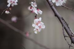 Flower on a tree in spring Stock Photos