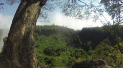 Victoria Falls mist and greenery with tree in foreground Stock Footage