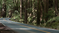 Vacation car drives through California Redwood forest HD 6155 Stock Footage