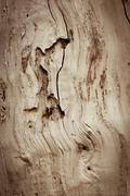 Background of old wood eaten by rodents Stock Photos