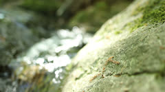 Peaceful rushing water two Stock Footage