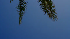 Blue Skies and Palm Tree Branches Stock Footage