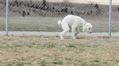 Using bathroom in dog park Stock Footage