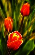 The dancing electric tulips Stock Photos