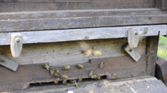 Bees - Hive - stock footage