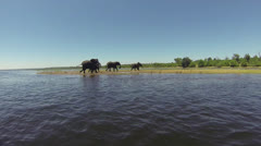 Elephants walking alongside Zambezi River Stock Footage