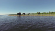 Stock Video Footage of Elephants walking alongside Zambezi River