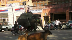 Painted Elephant and Sacred Cows in Jaipur 01 25fps.mp4 Stock Footage