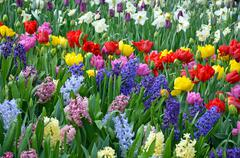 Beautiful spring garden Stock Photos