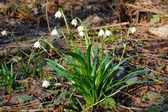 Spring snowflake Stock Photos