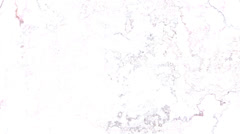 Film Stains Texture - stock footage