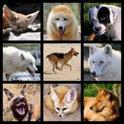 Mosaic photos of Canidae Stock Photos