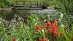 (1285) Looping Colorado spring wilderness wildflowers scene - hiking path bridge Stock Footage