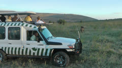 Crossover vehicle at safari Stock Footage