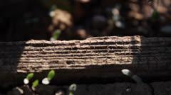 Ant Run - stock footage
