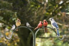 Bird diversity meeting Stock Photos