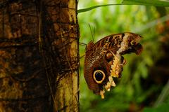 Butterfly on a tree trunk in the botanical gardens Stock Photos